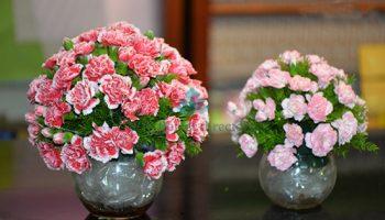 Cách cắm hoa cẩm chướng bình tròn để bàn