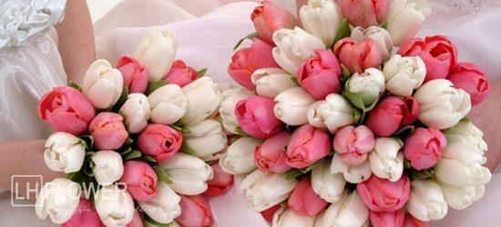 Hoa cưới tulip cầm tay cô dâu